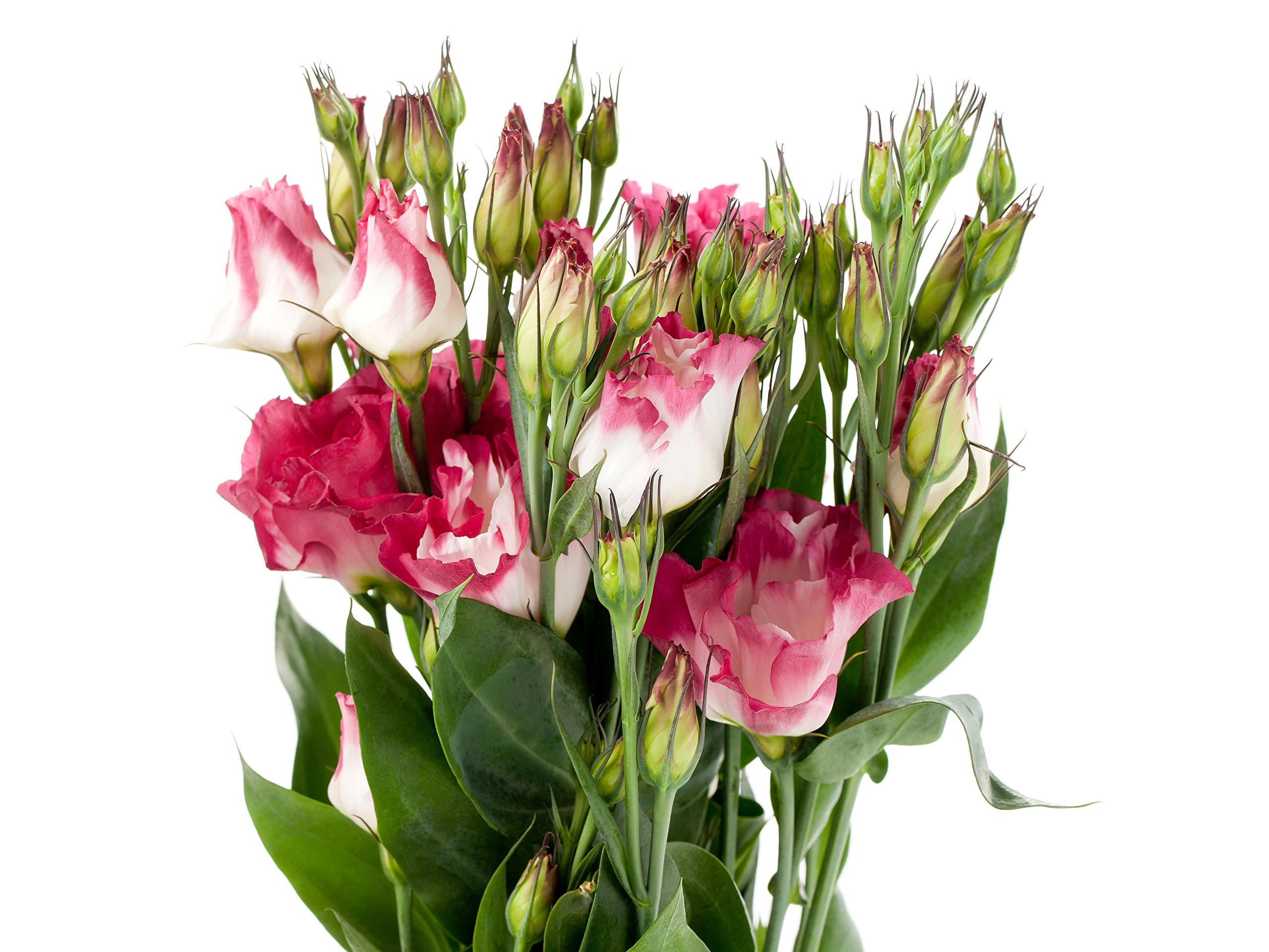Букеты цветы описание и фото