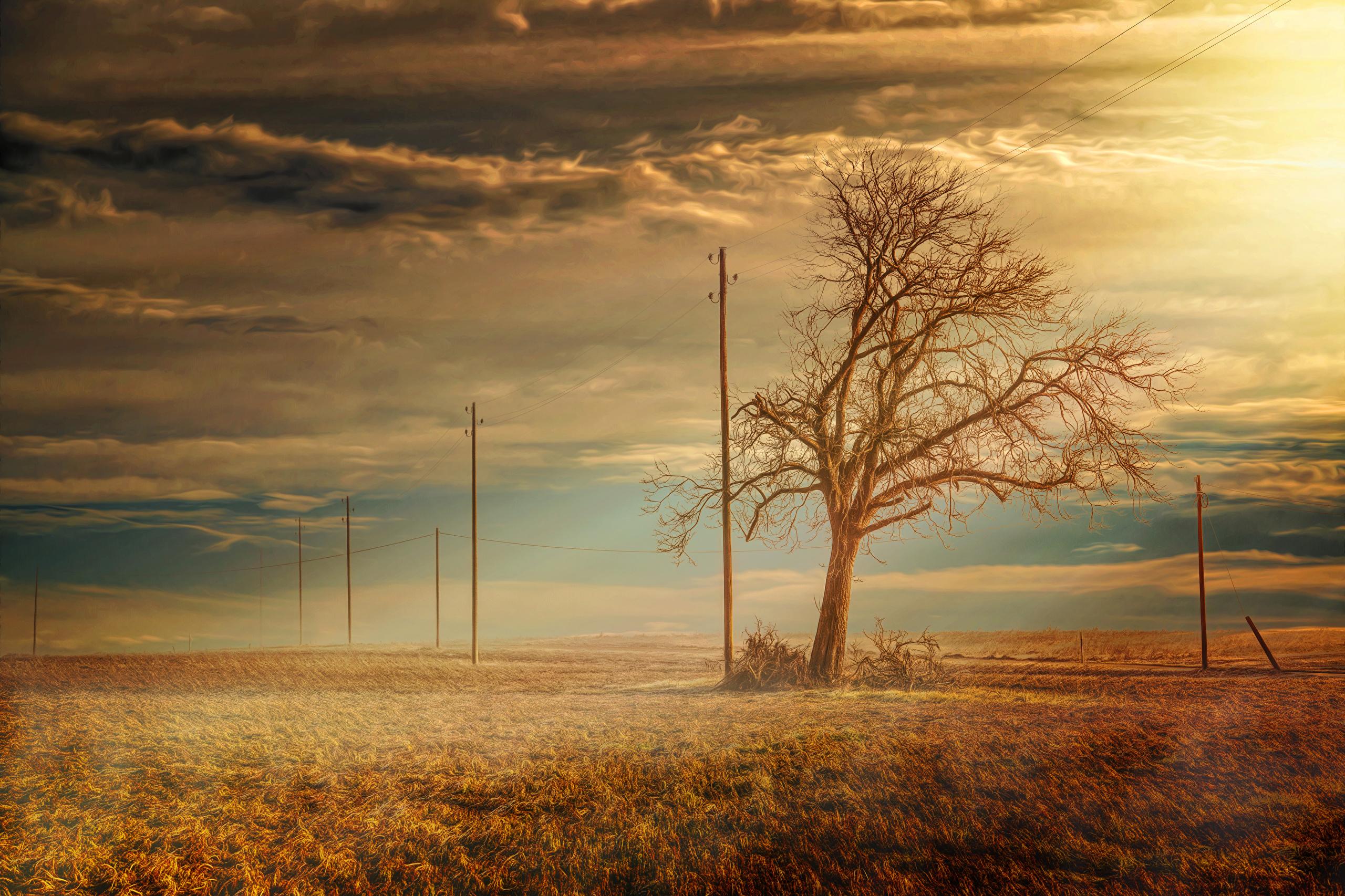 природа трава горизонт солнце деревья  № 2760769  скачать