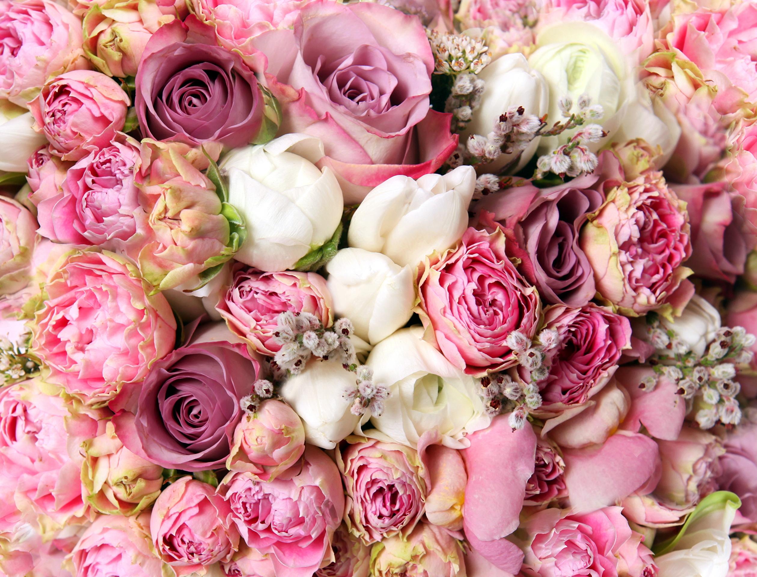 Пионовидные розы для открытки 327