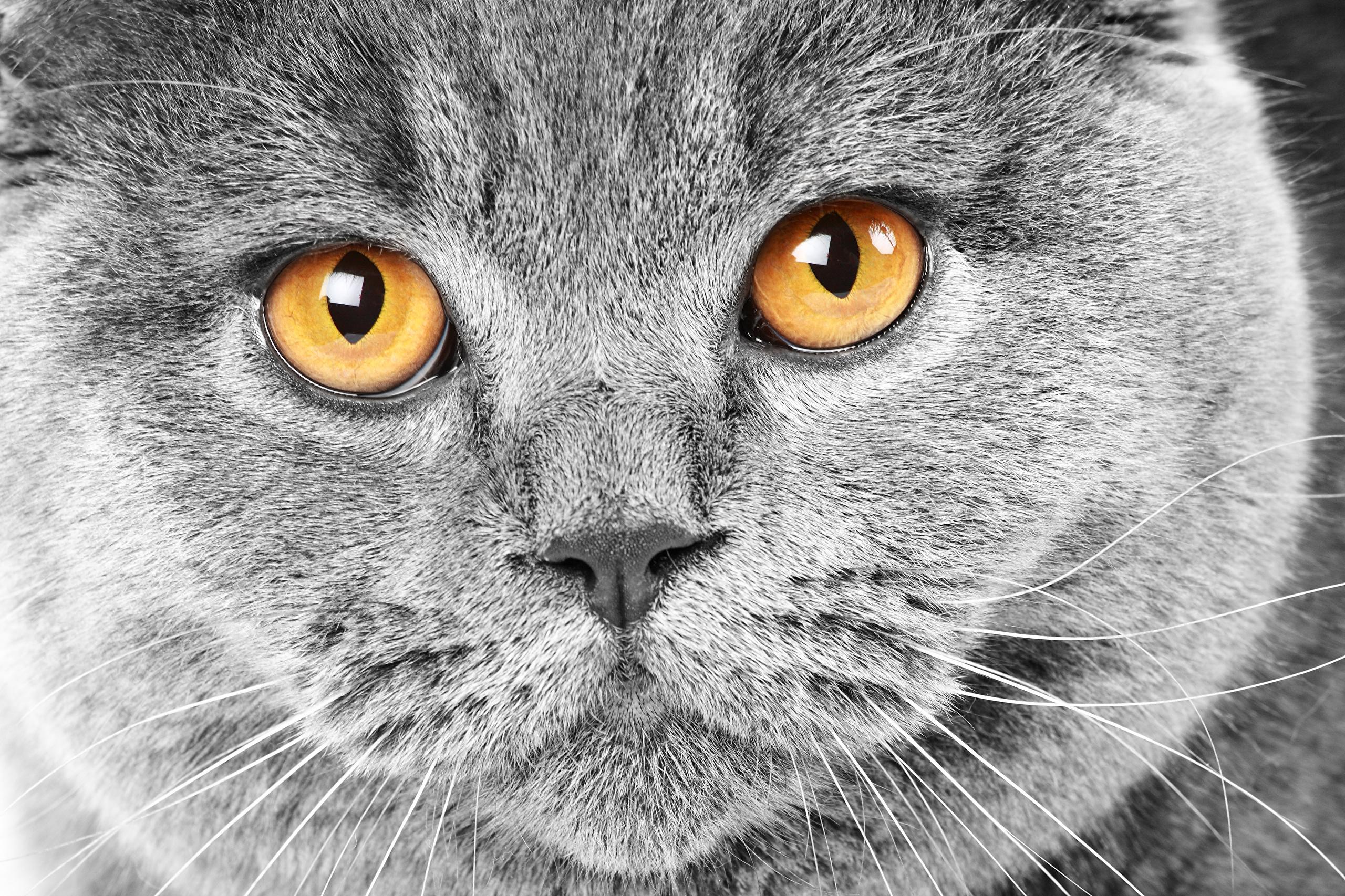 Серый кот  № 411881 бесплатно