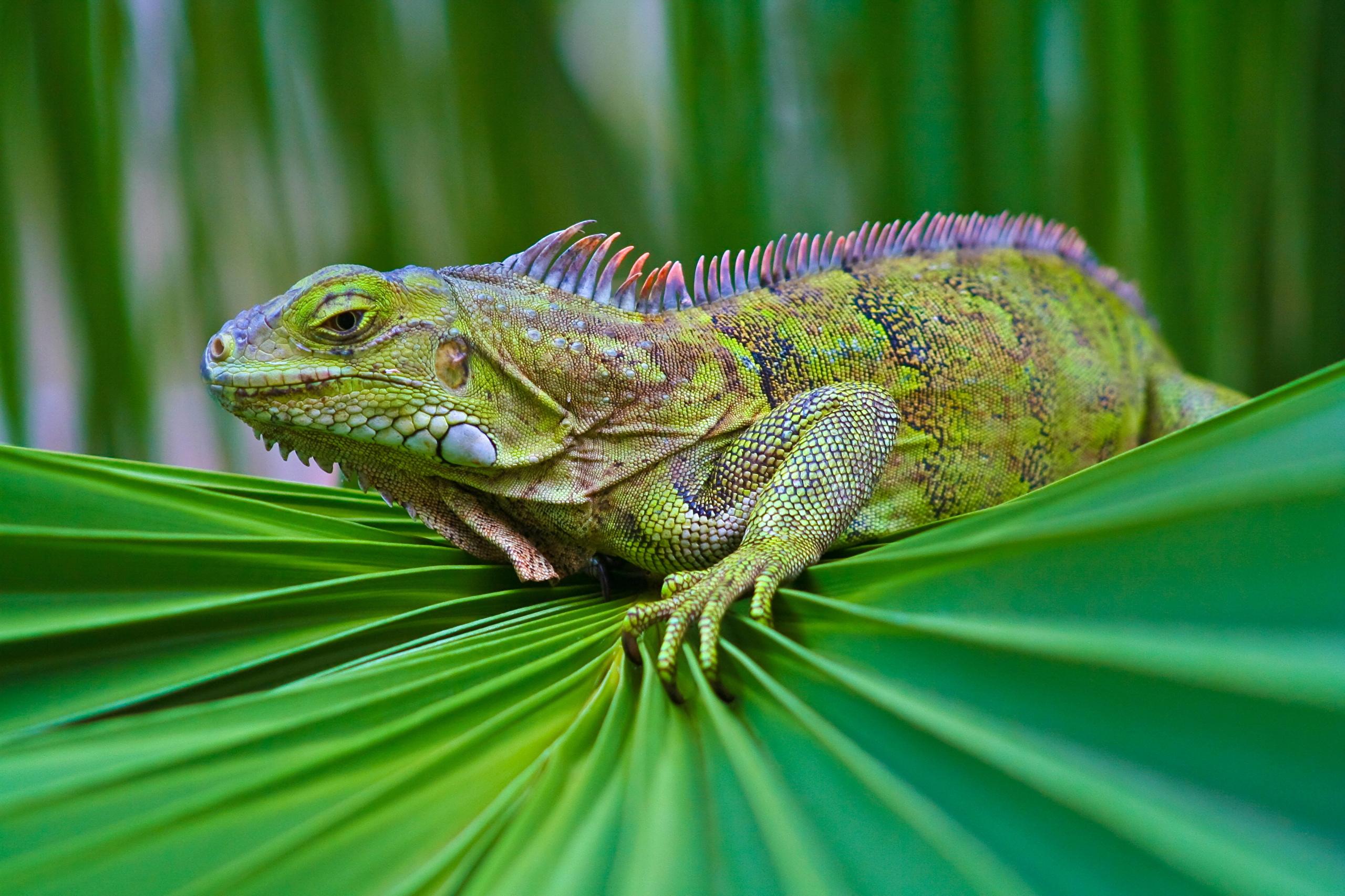 природа животные рептилия  № 234935  скачать