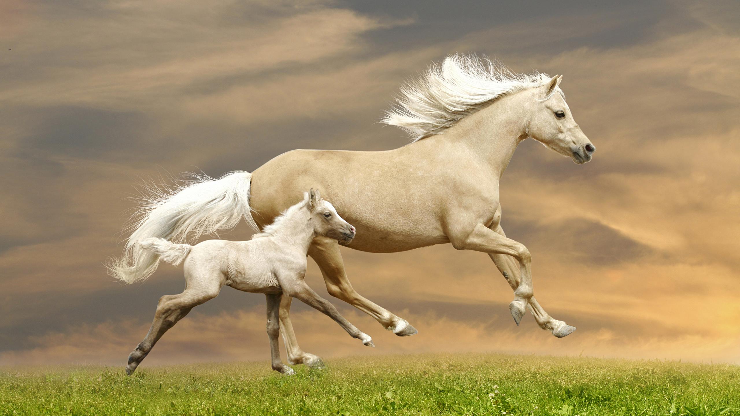 Скачать обои на рабочий стол про лошадей