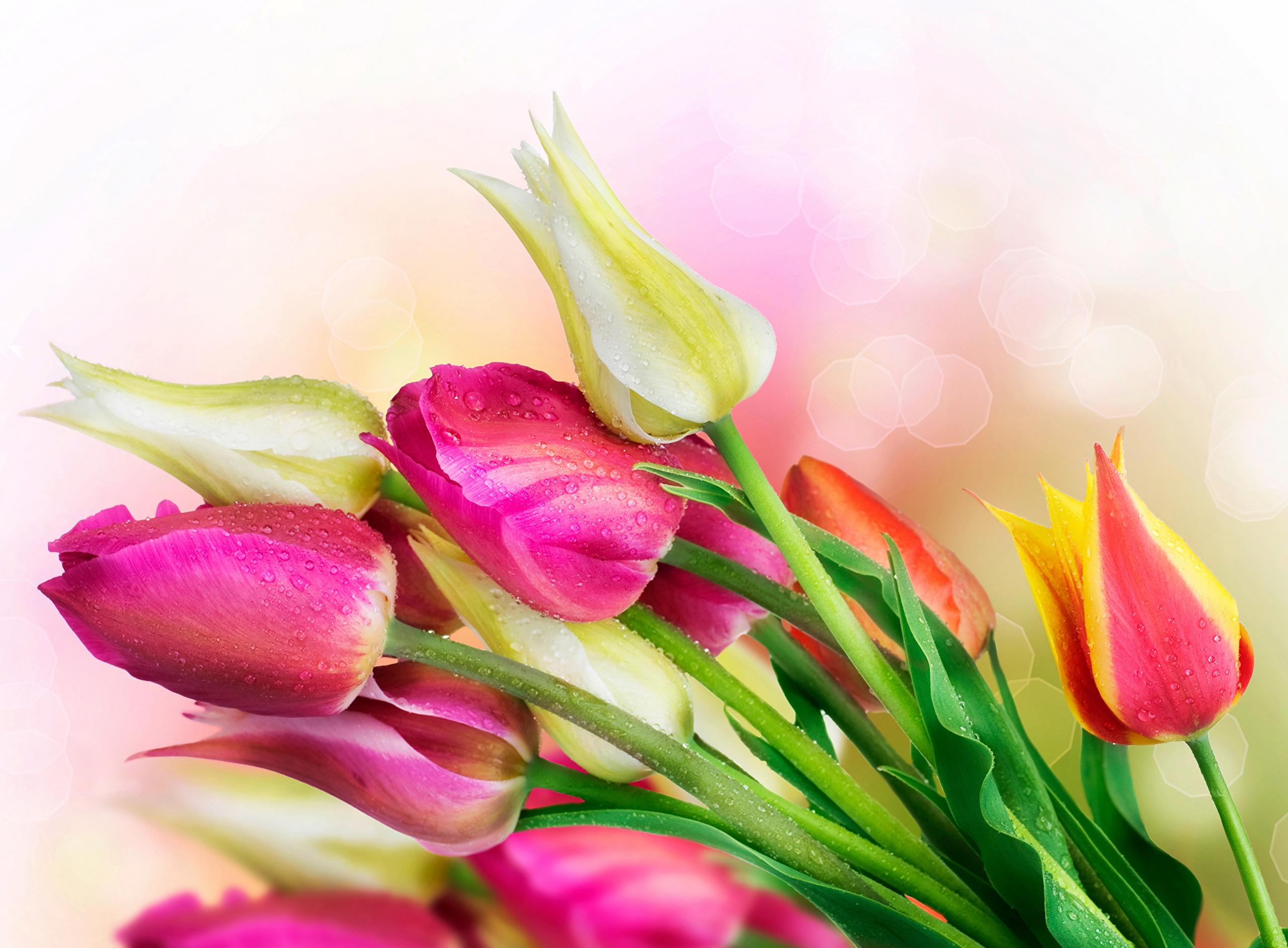 Открытка с днем рождения цветы тюльпаны