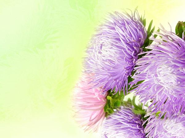 Фотошоп для цветов подняться на олимп