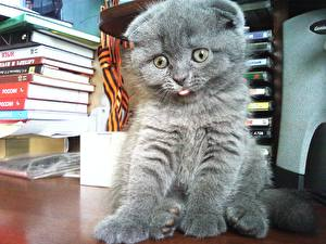 Кошки глаза взгляд морда взгляд кошки