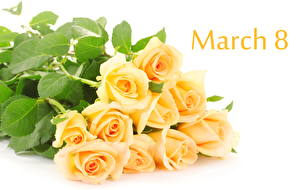 Roses Online  Roses Delivery Australia Wide  Flowers For