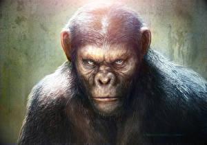 Обои Восстание планеты обезьян Обезьяны Фильмы Животные