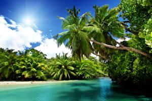 Обои Тропики Природа