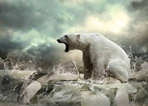 Обои Лед Природа