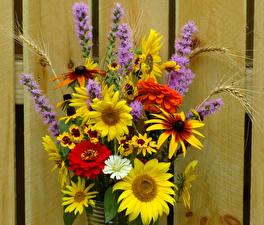 Обои Букеты Циннии Подсолнухи Цветы