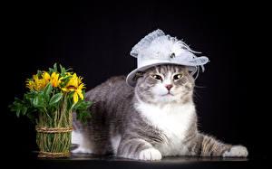 Обои Кошки Подсолнухи Шляпа Животные