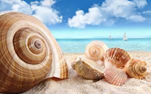 Обои Крупным планом Ракушки Море Небо Облака Песок Природа фото