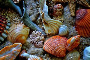 Обои Ракушки Крупным планом Песок Природа фото