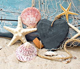 Обои Морские звезды Ракушки Крупным планом Песок Сердце Природа фото
