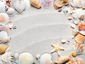 Обои Ракушки Морские звезды Крупным планом Песок Природа фото
