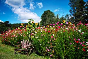 Обои Сады Космея Подсолнухи Скамейка Природа Цветы