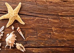 Обои Морские звезды Ракушки Крупным планом Природа фото