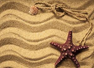 Обои Морские звезды Крупным планом Ракушки Песок Природа фото