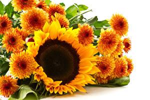 Обои Хризантемы Подсолнухи Крупным планом Оранжевый Цветы фото