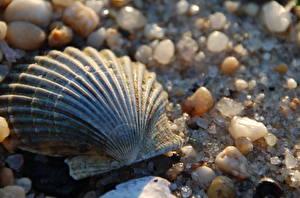 Обои Ракушки Камни Крупным планом Песок Природа фото