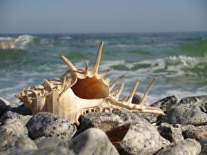 Обои Ракушки Море Камни Природа фото