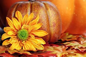 Обои Времена года Осень Тыква Подсолнухи Листья Природа фото