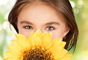 Обои Подсолнухи Глаза Девочки Шатенка Волосы Дети фото