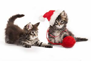Обои Праздники Новый год Кошки Котята Шапки Двое Животные картинки