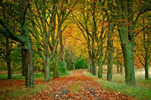 Обои Времена года Осень Деревья Листья Аллея Природа картинки