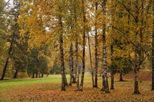 Обои Россия Санкт-Петербург Парки Осень Деревья Листья Gatchina Природа картинки