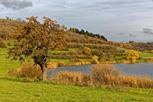 Обои Германия Пруд Осень Деревья Кусты Трава Schalkenmehren Природа картинки