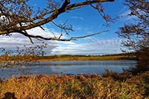 Обои Германия Пейзаж Реки Небо Осень Трава Ветки Ulmen Природа картинки