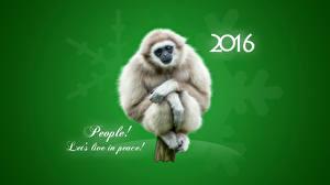 Обои Обезьяны Новый год Праздники 2016 Животные фото