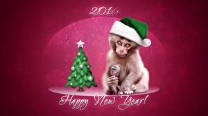 Обои Праздники Новый год Обезьяны Шапки Елка 2016 Животные фото
