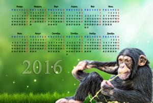 Обои Обезьяны Календарь 2016 Животные фото