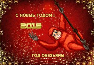 Обои Обезьяны Новый год 2016 Животные фото
