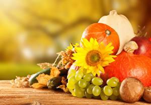 Обои Осень Виноград Тыква Подсолнухи Овощи Еда фото