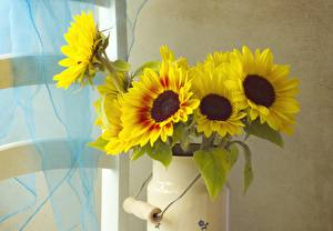 Обои Подсолнухи Цветы фото