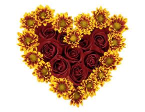 Обои День святого Валентина Розы Подсолнухи Сердце Цветы фото