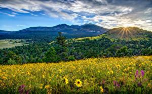 Обои США Пейзаж Горы Леса Поля Подсолнухи Лучи света Облака Flagstaff Arizona Природа фото