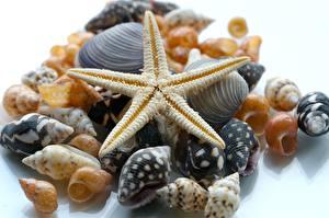 Обои Ракушки Много Морские звезды Цветы фото