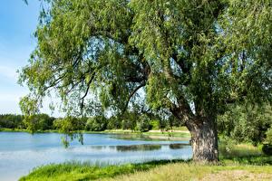 Обои Россия Лето Пруд Деревья Vishnevoye Kaliningrad Oblast Природа картинки