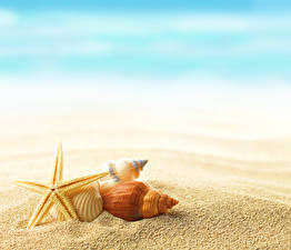 Обои Морские звезды Ракушки Песок Природа фото