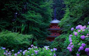 Обои Япония Сады Гортензия Пагоды Деревья Kyoto Природа картинки