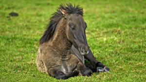 Обои Лошади Трава Животные картинки