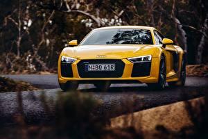 Обои Audi Желтый R8 V10 Автомобили картинки