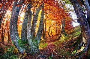 Обои Времена года Осень Ствол дерева Природа картинки