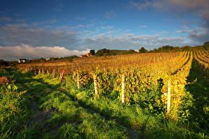 Обои Австралия Небо Кусты Трава Vineyards Природа картинки