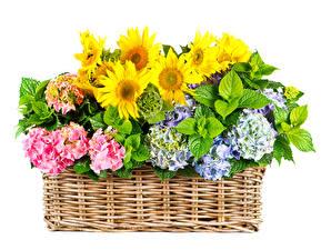 Обои Гортензия Подсолнухи Белый фон Корзинка Цветы фото