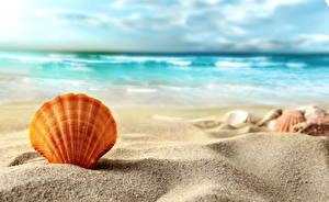 Обои Море Ракушки Песок Пляж Природа фото